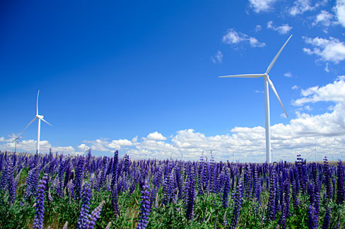 The Nature Of Wind Farms
